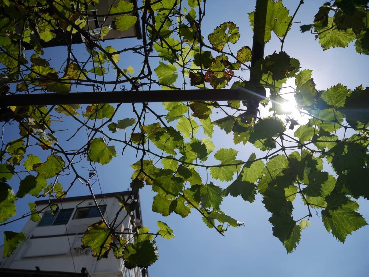 緑の天井。その先にちらりと見える太陽。夏はまだ終わっちゃいないぜ!